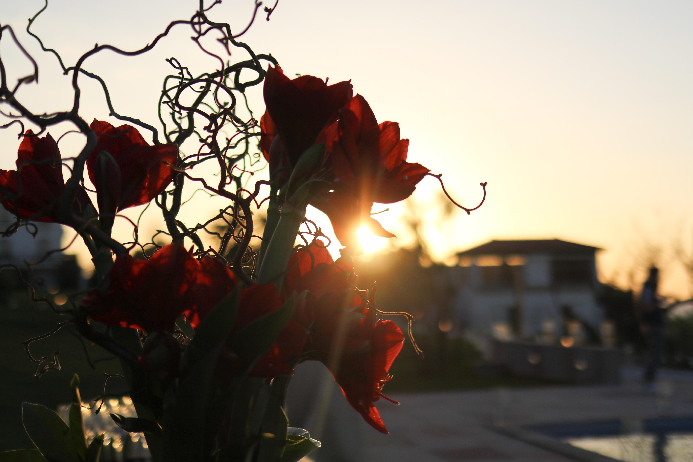 Couché de soleil la réserve