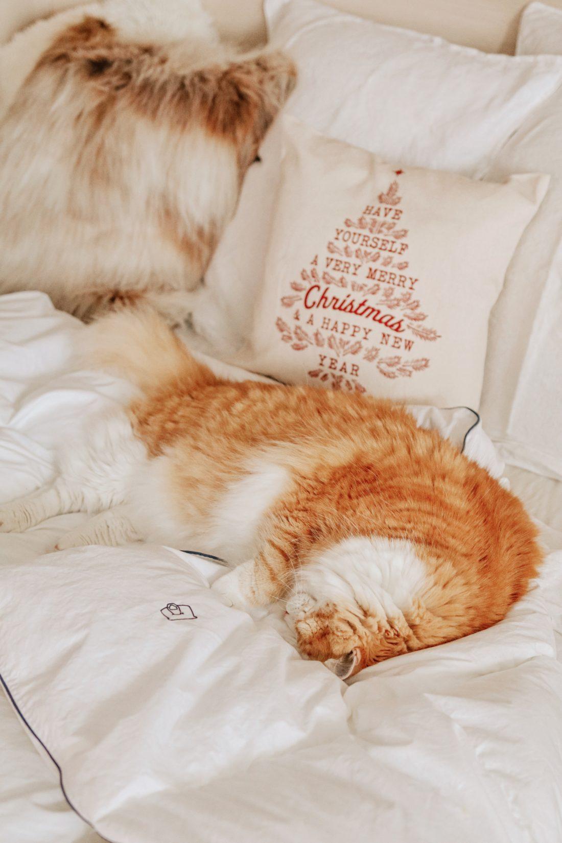 Un chat en appartement, son alimentation & son environnement
